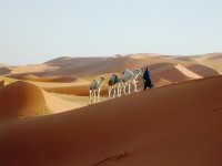 Guided excursion in the Sahara of Morocco